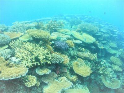 旅サラダmemo フィジー「青木愛さんのフィジー!リゾートアイランドを巡るママヌザ諸島の旅」